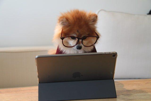 ein niedlicher Hund der in ein iPad sieht
